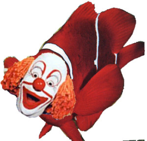 clownfish=clown